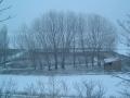 Balsa nevada